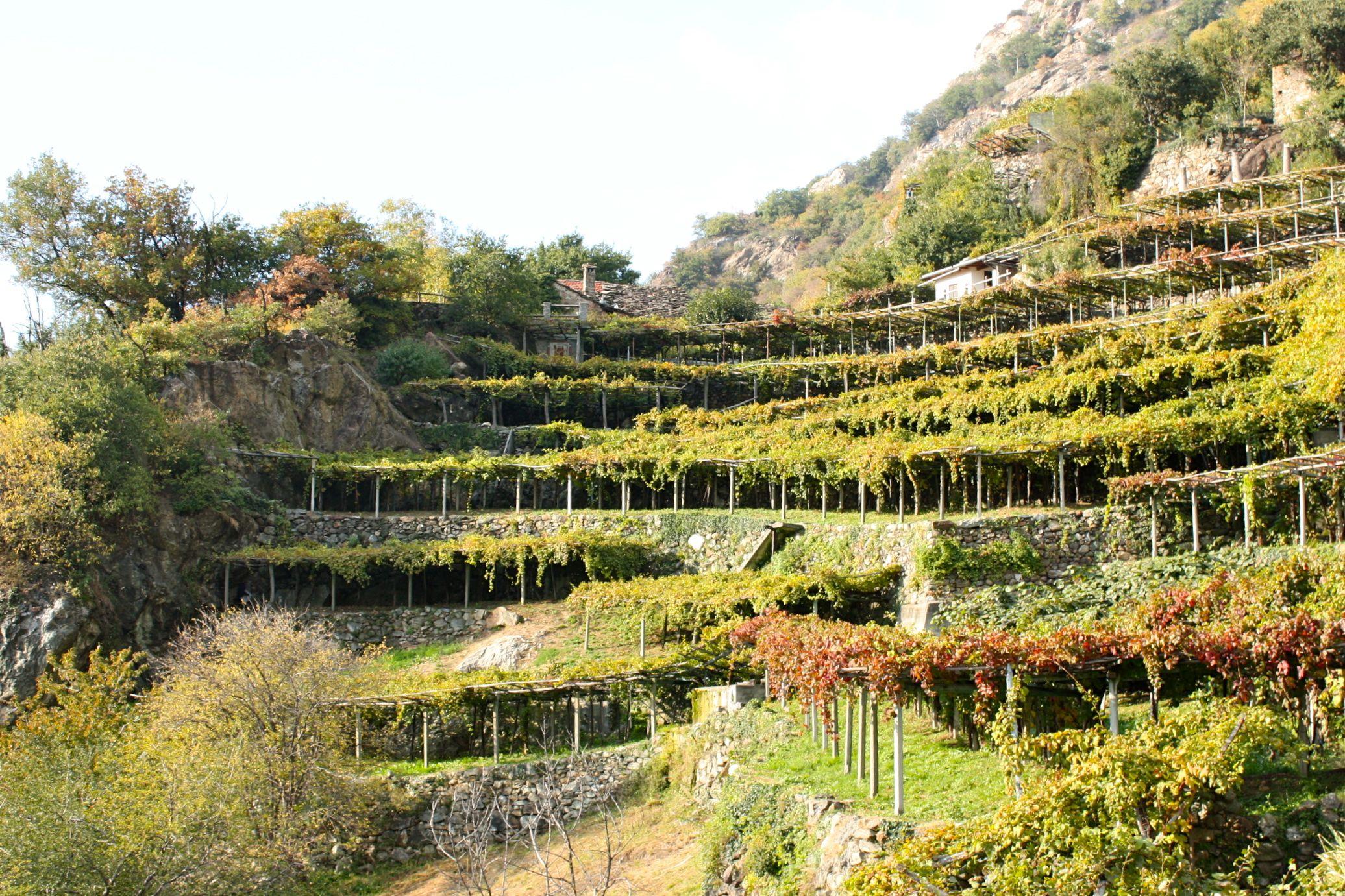 Un vecchio giardino di collina da ripensare - Pagina 21